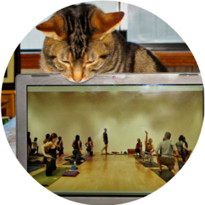 cat watching virtual yoga and pilates classes